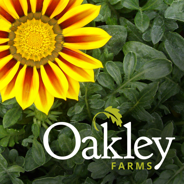 Oakley Farms Branding