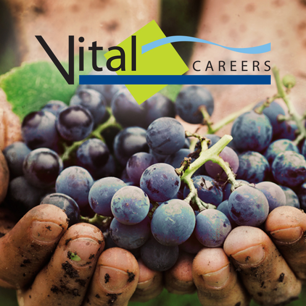 Vital Careers Website
