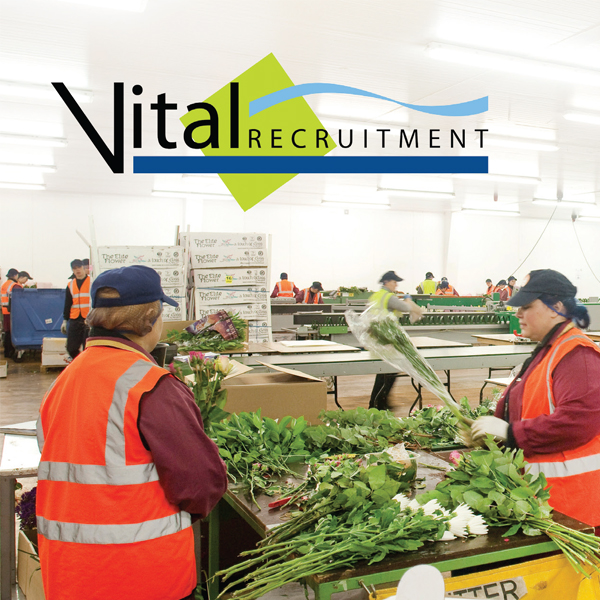 Vital Recruitment Website